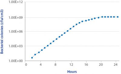 Bacterial growth versus Time