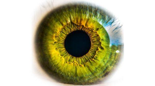 Q8Oils anatomy eye